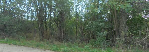 Парцел с площ 2508 кв.м., с.Хаджи Димитър, общ. Каварна, ID: 592/19